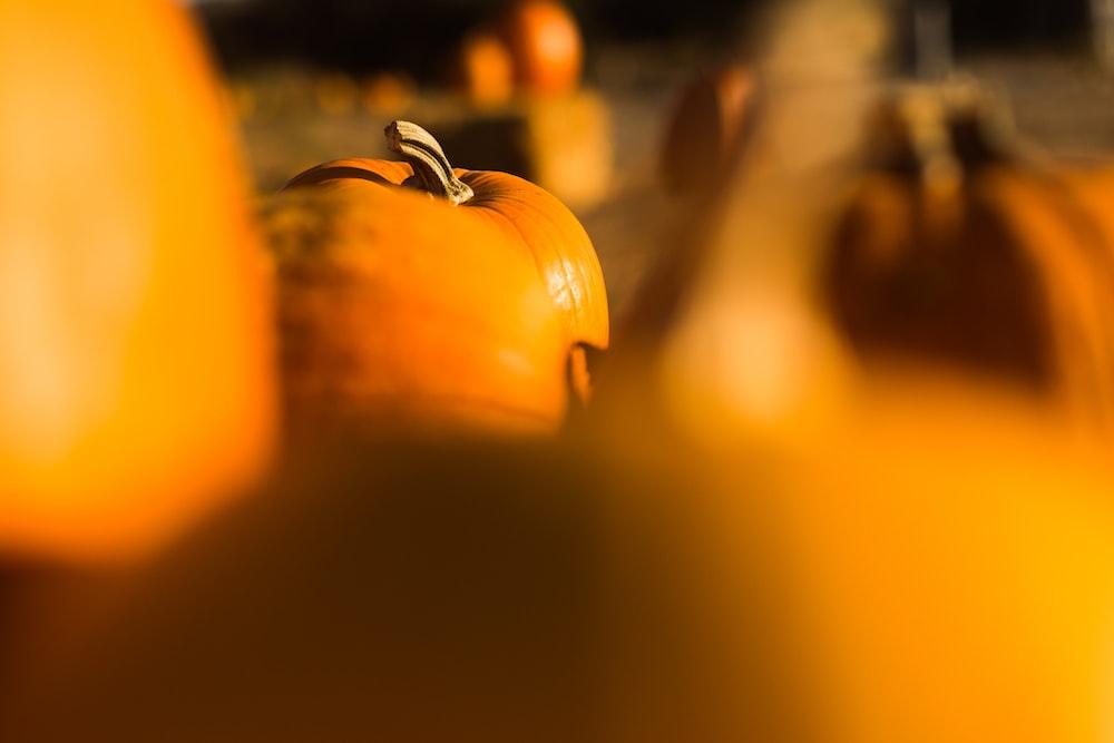 selected focus photo of orange fruit