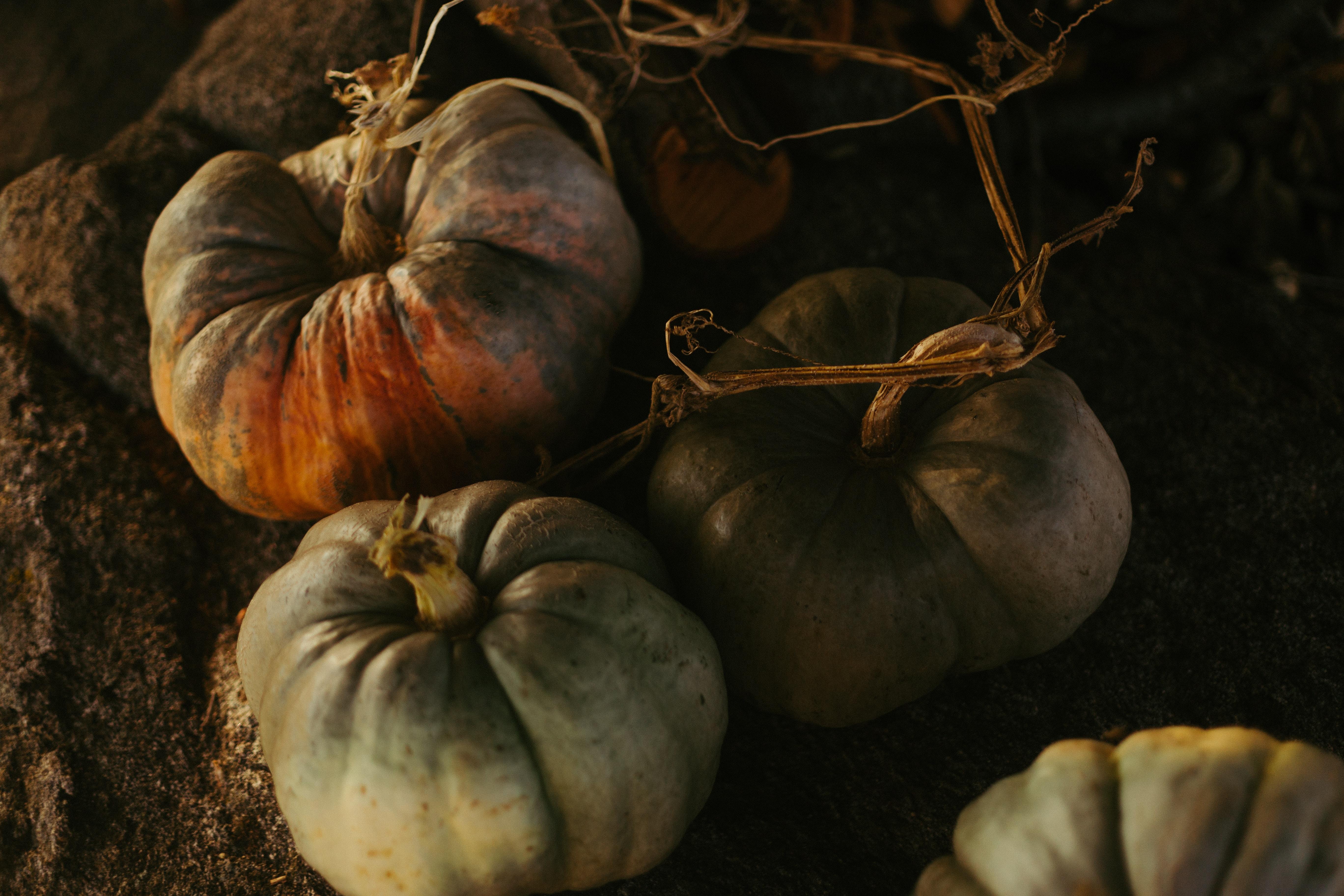 pumpkin plants on soil