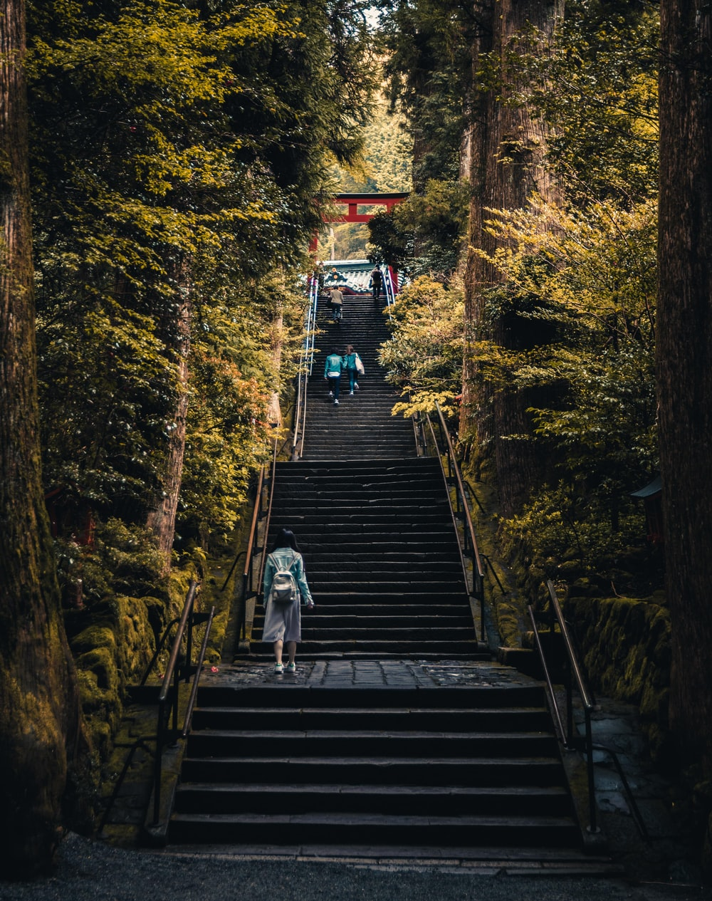 three person walking on stairs between green trees