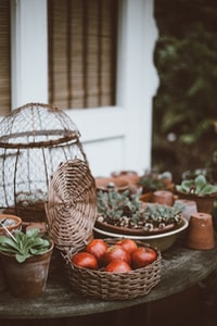 apples in basket on table beside plants