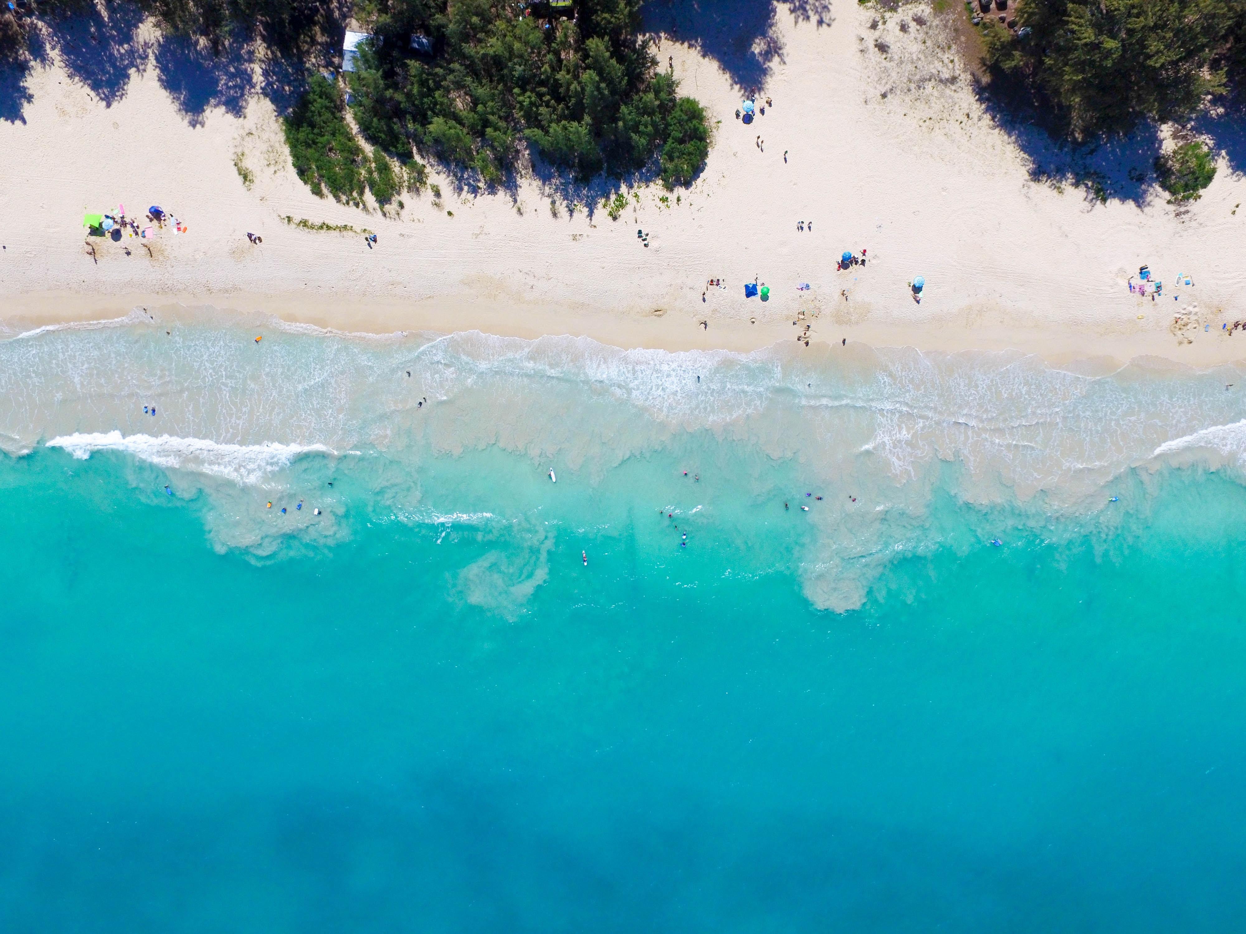 aerial view photography of people sunbathing on seashore