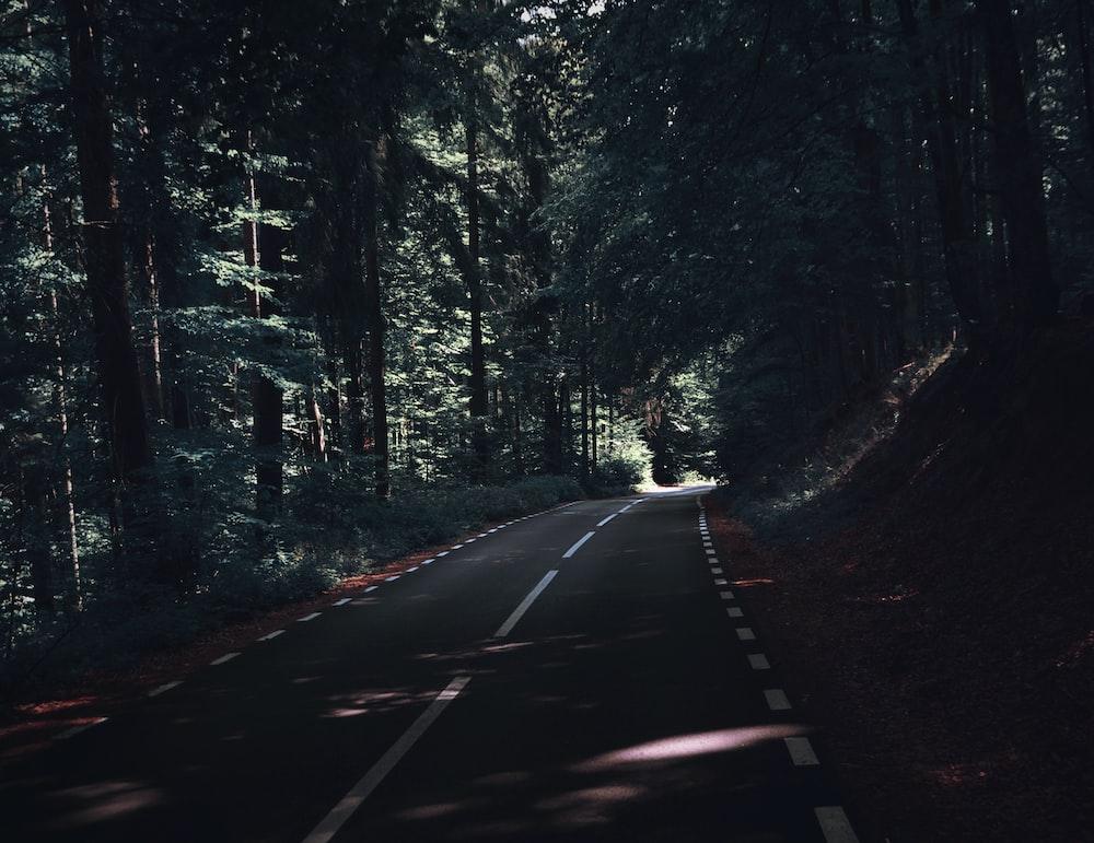 gray asphalt road under green leaf trees at daytime