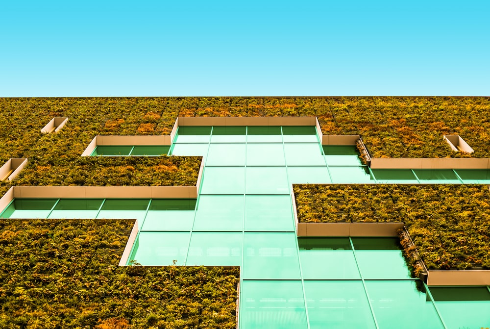 building with vegetation wall