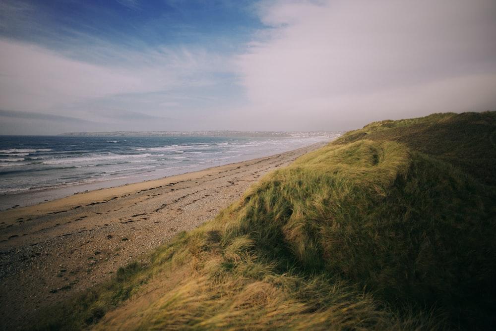 photo of green grass near sea at daytime