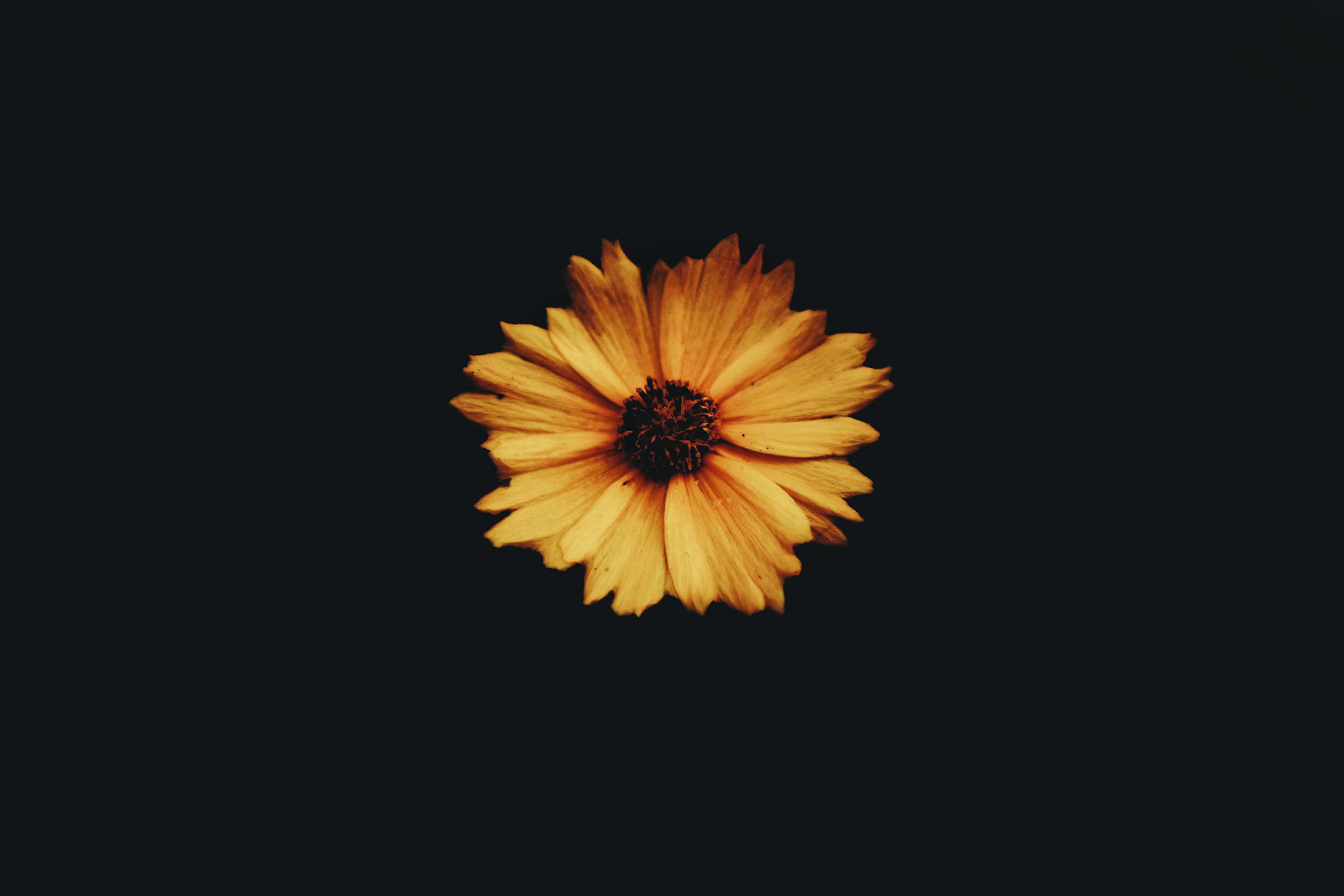 photo of tickseed flower
