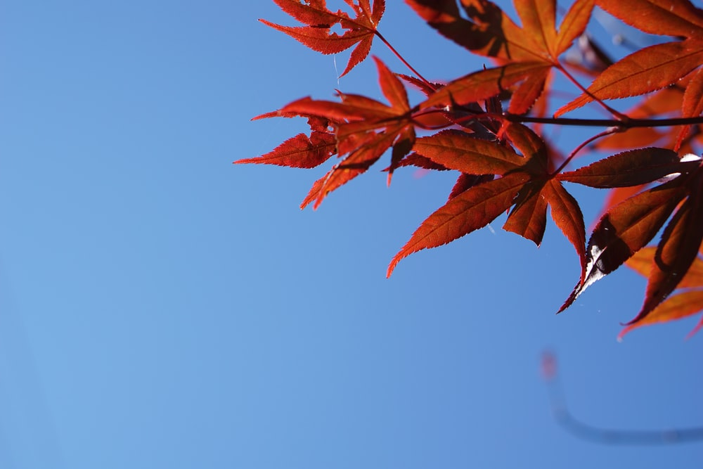 close up photo of dry leaf