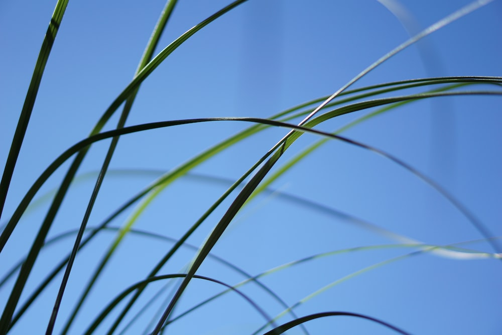 green grass in macro lens photography