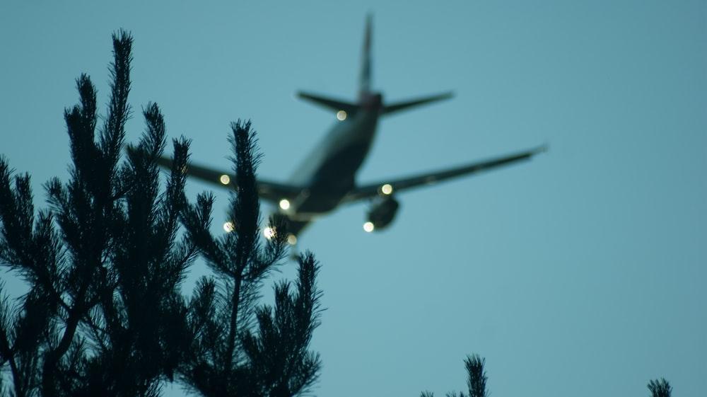 tilt shift lens photography of green grass and plane
