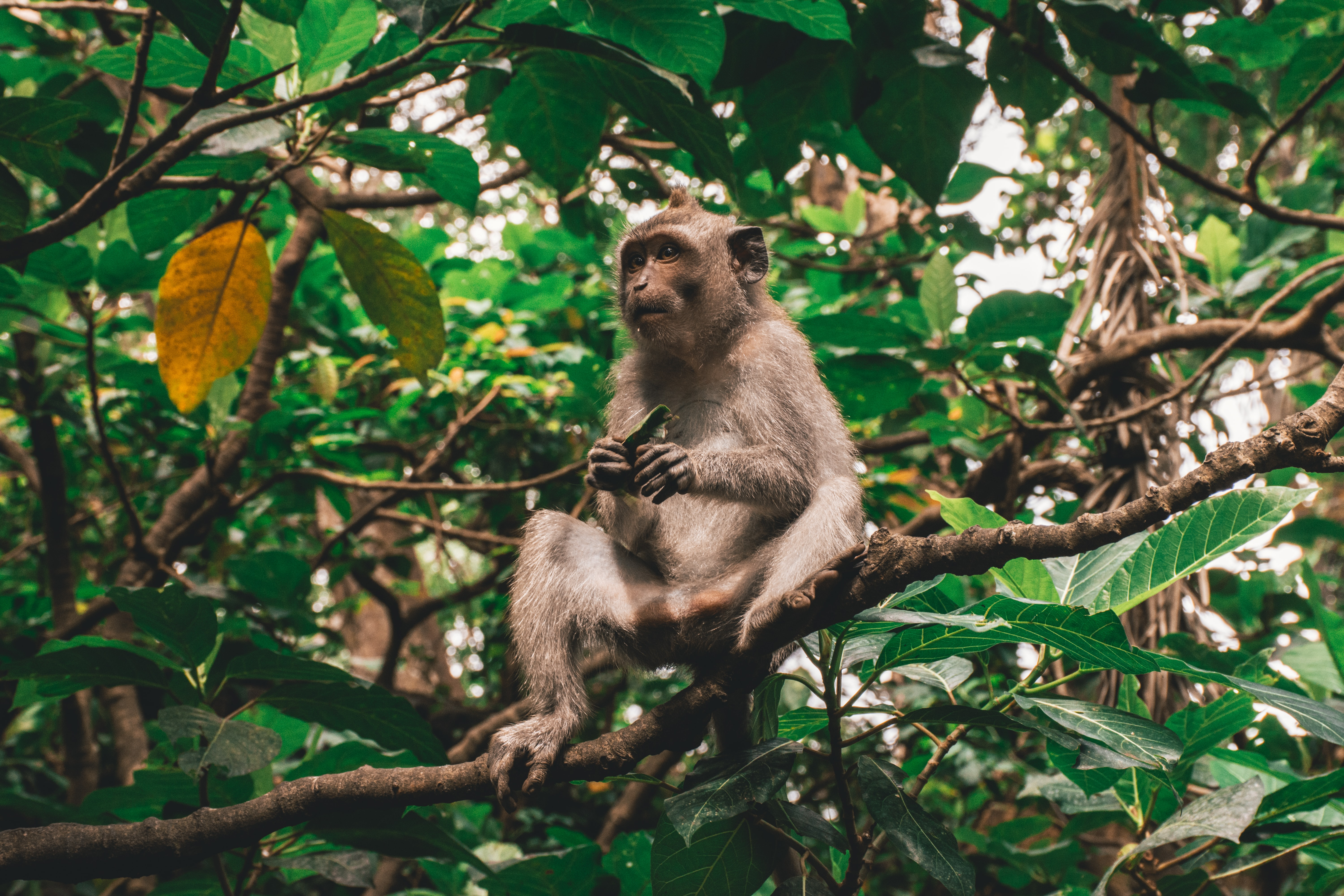 monkey sitting on branch