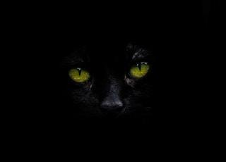 photo of animal eyes