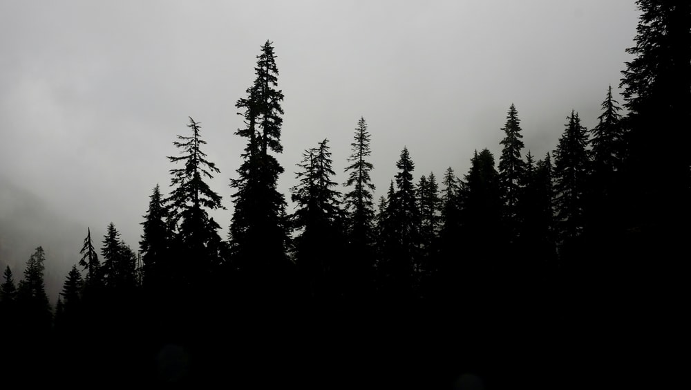 silhouette photo of trees with white clouds