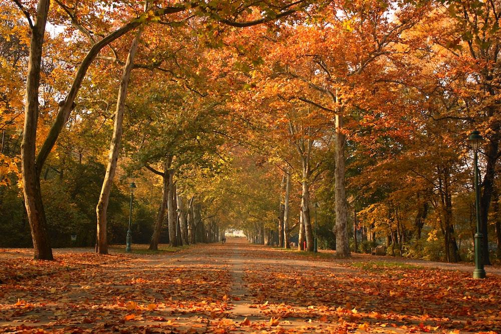 brown leafed trees pathway