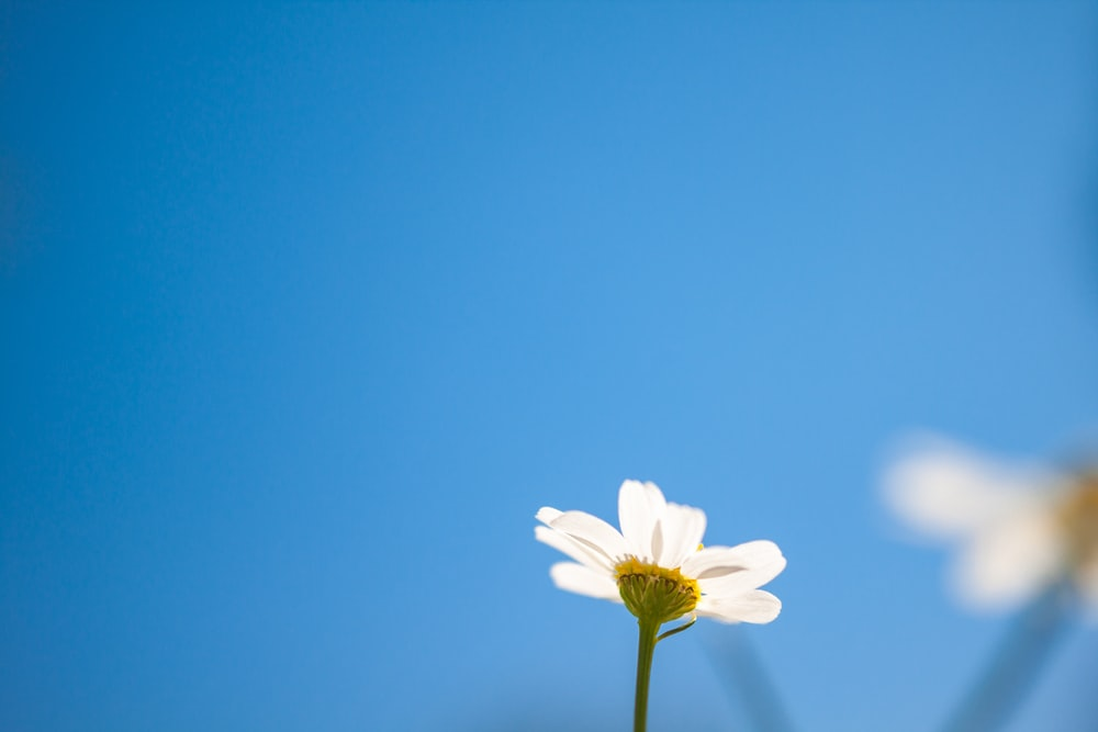 low-angle photography of daisy flower
