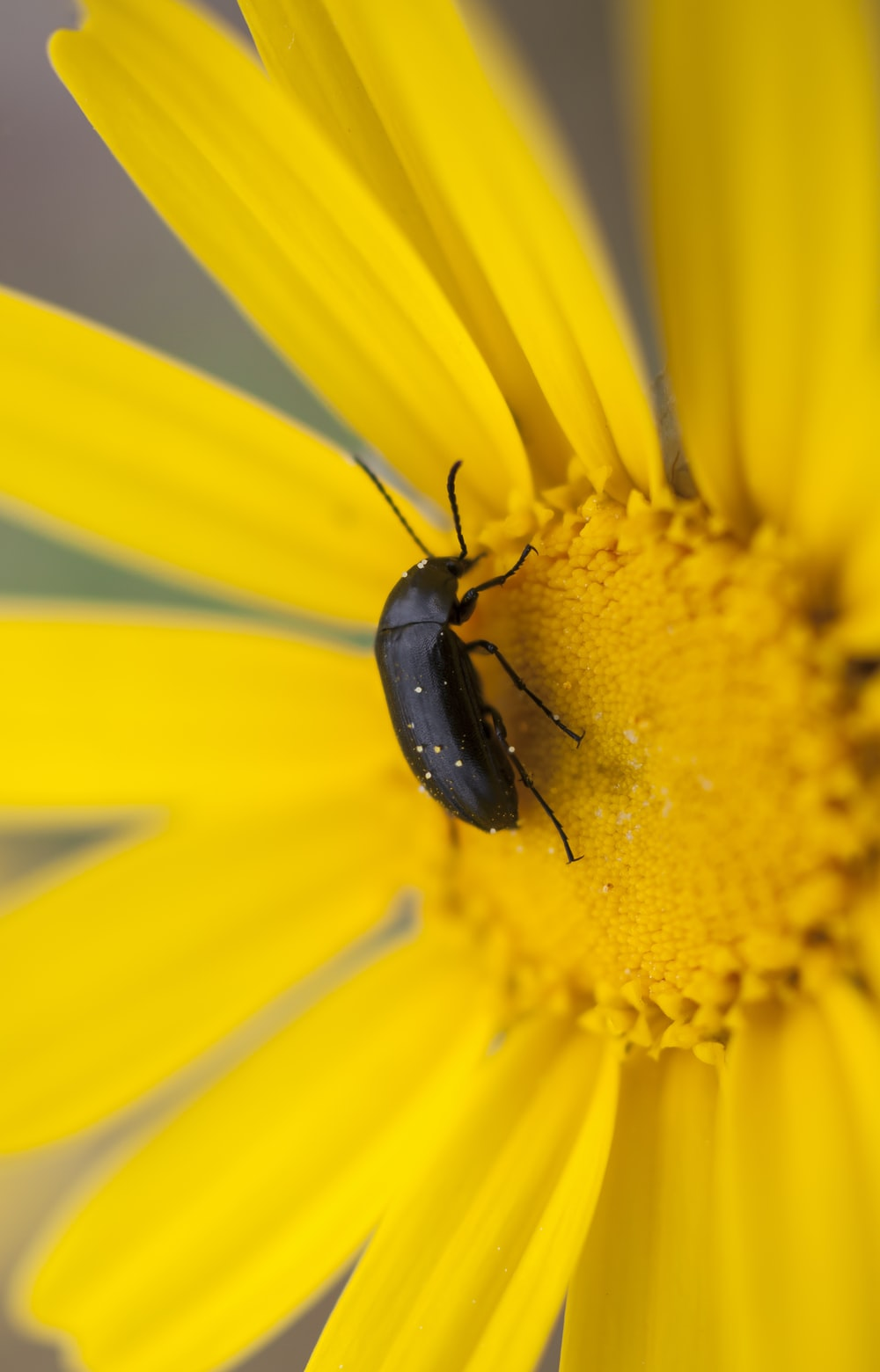 closeup photography of brown bug on flower