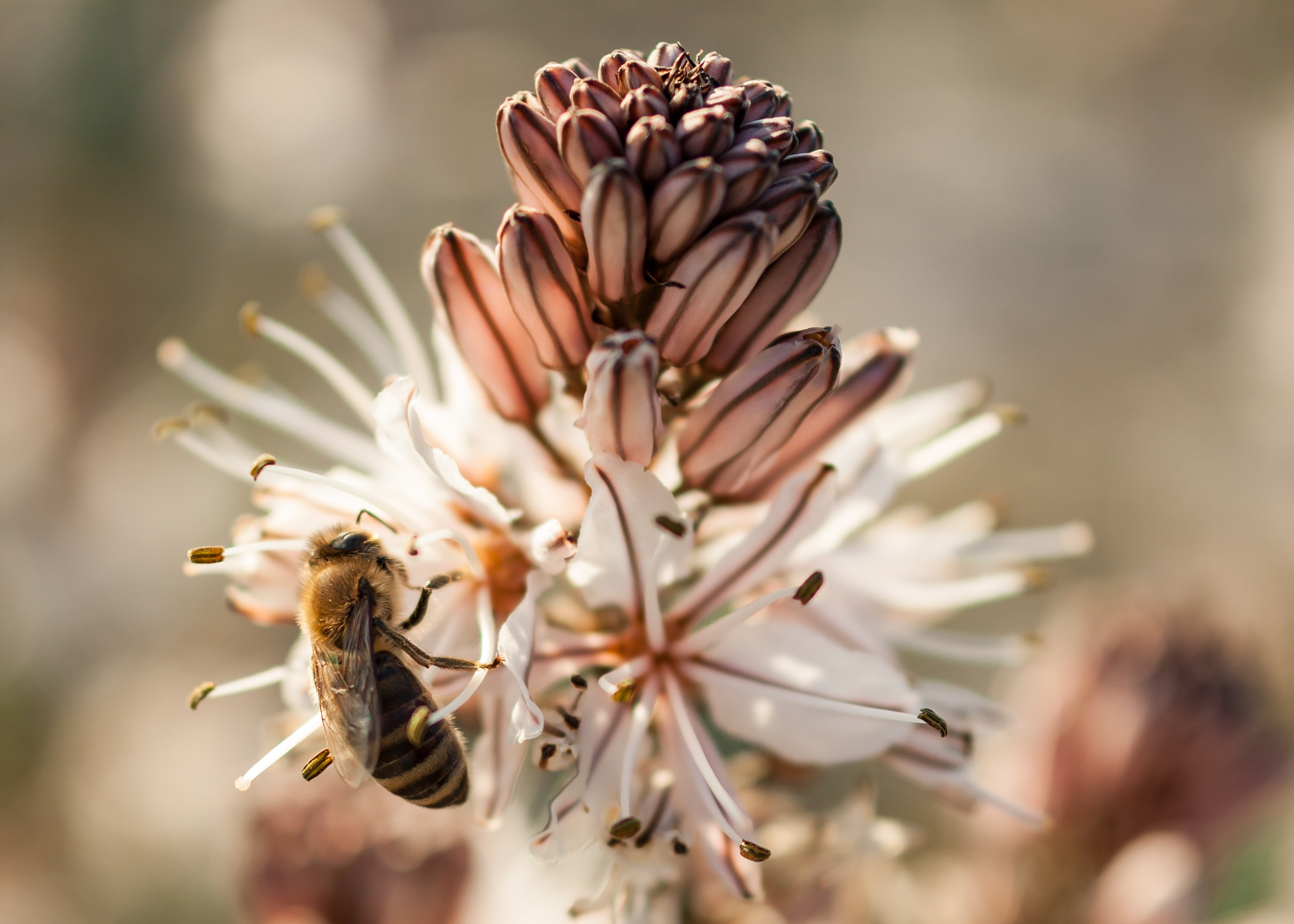 selective focus photography photo of bee on white flowers