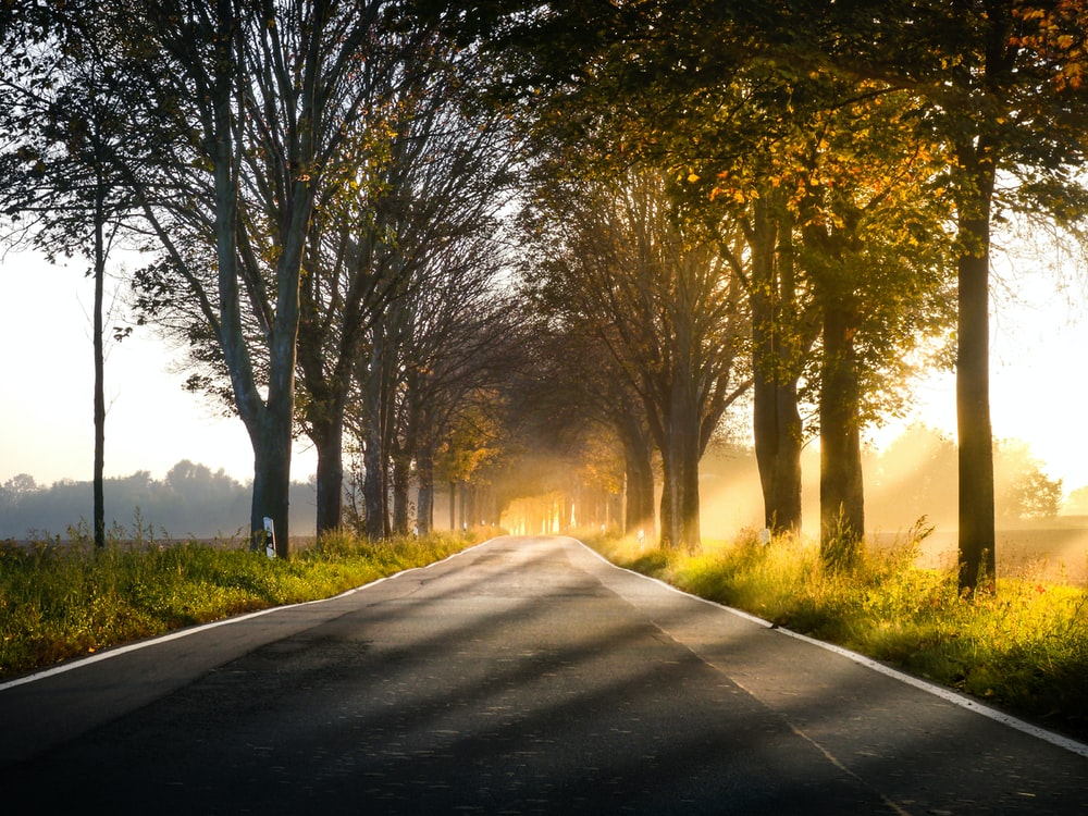 landscape of road near trees