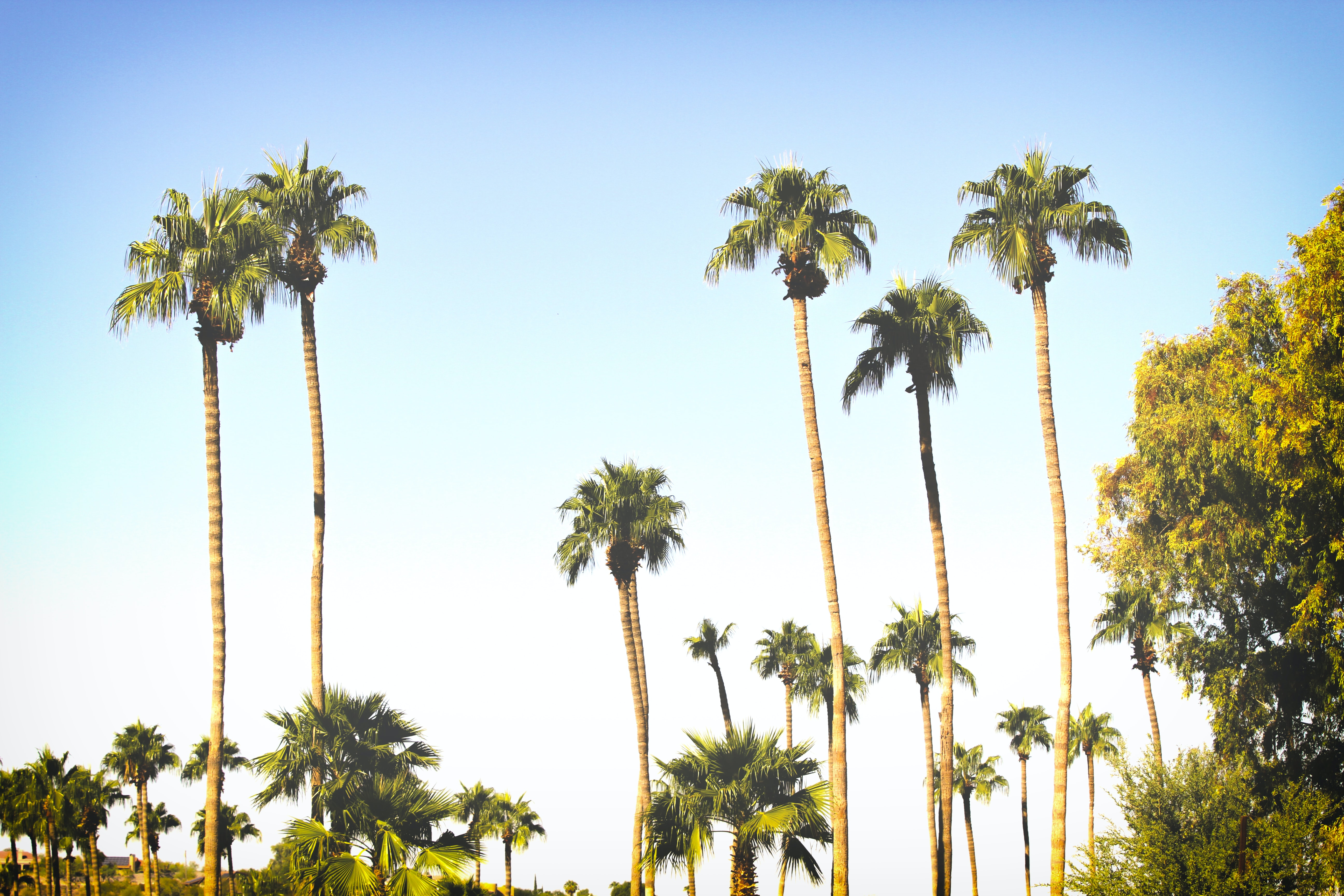 palm trees under clear blue sky