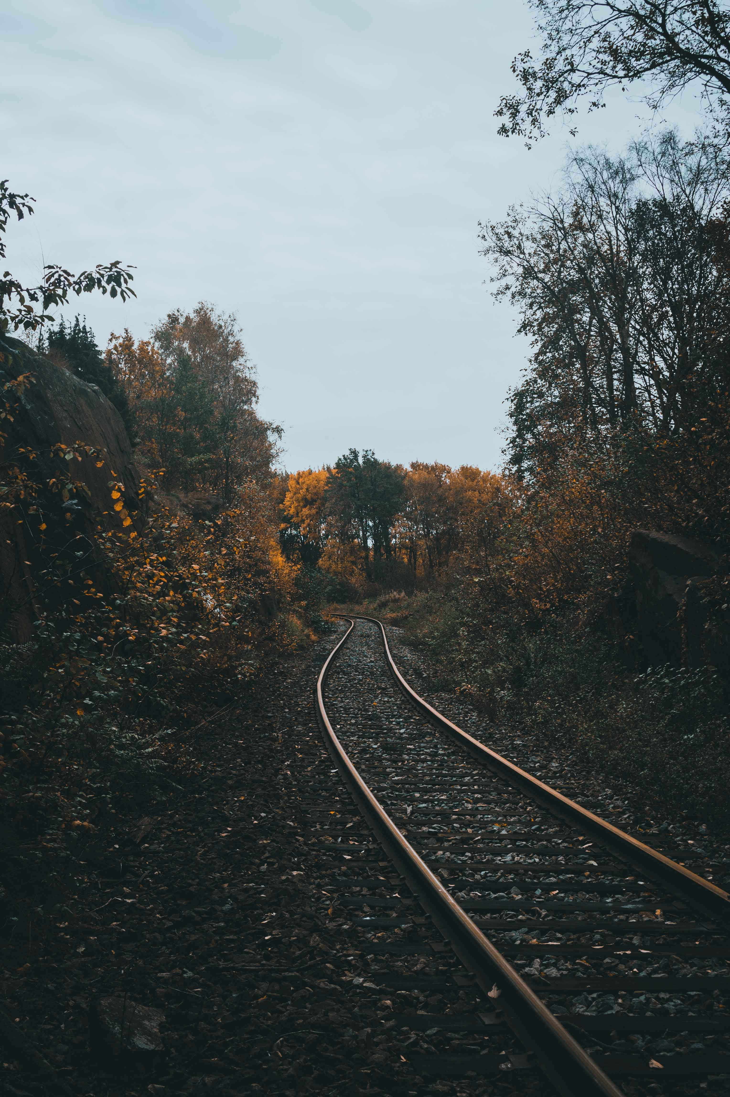 empty railroad between of forest trees