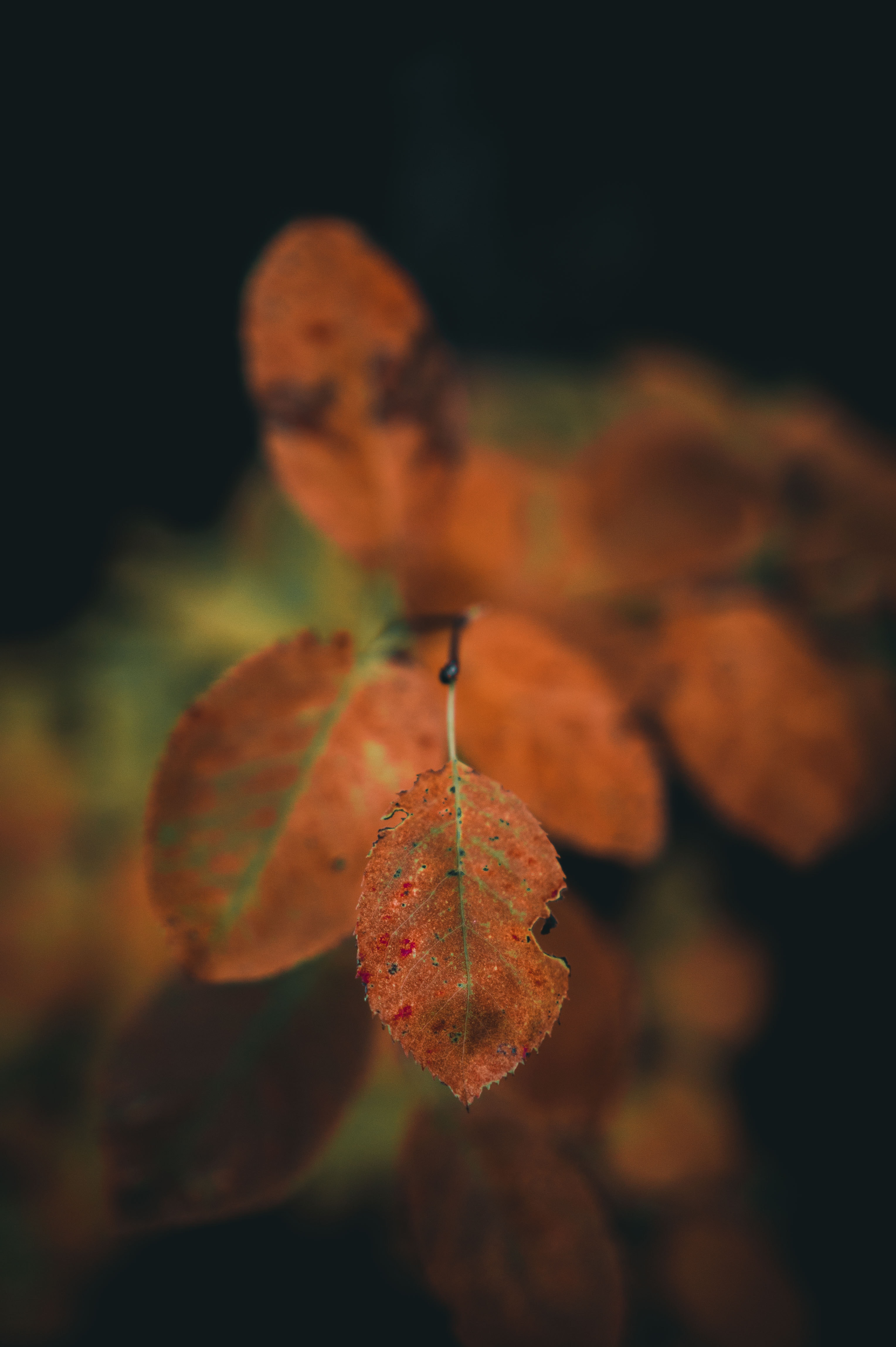 closeup photo of brown leaves