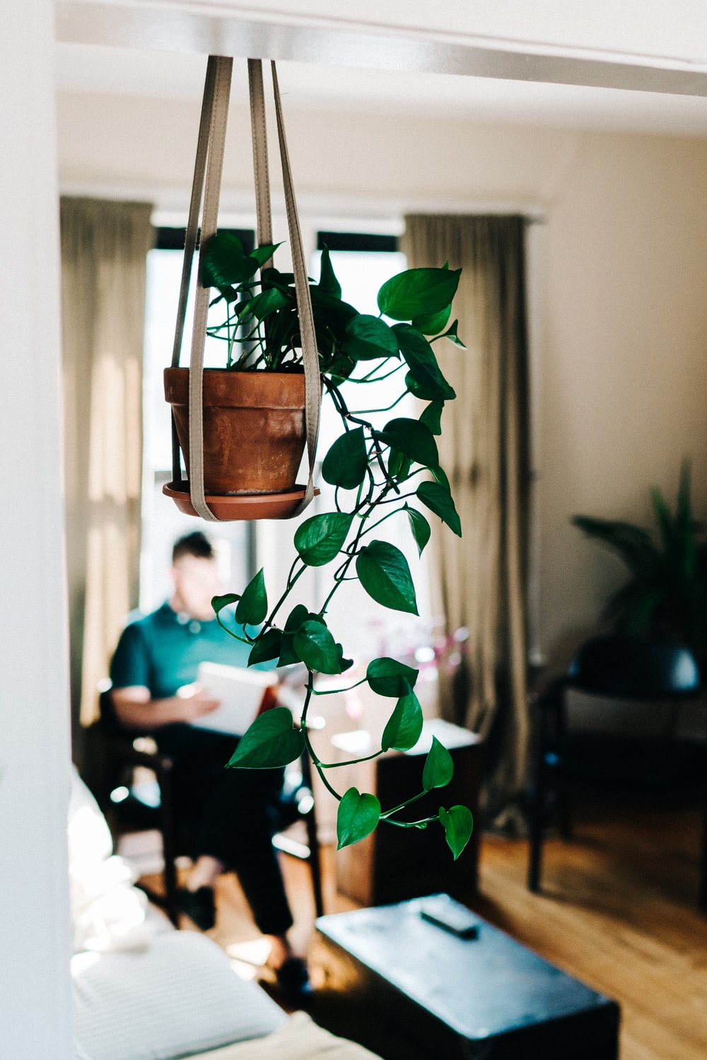 green leafy plant hanging on brown ceramic flowerpot