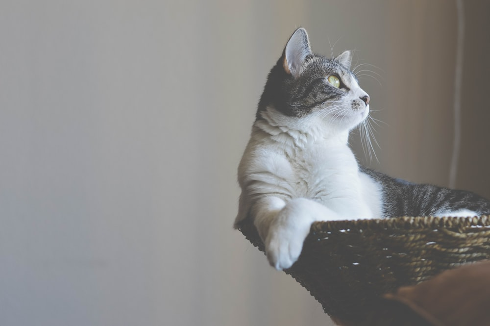 white and black cat sitting on basket