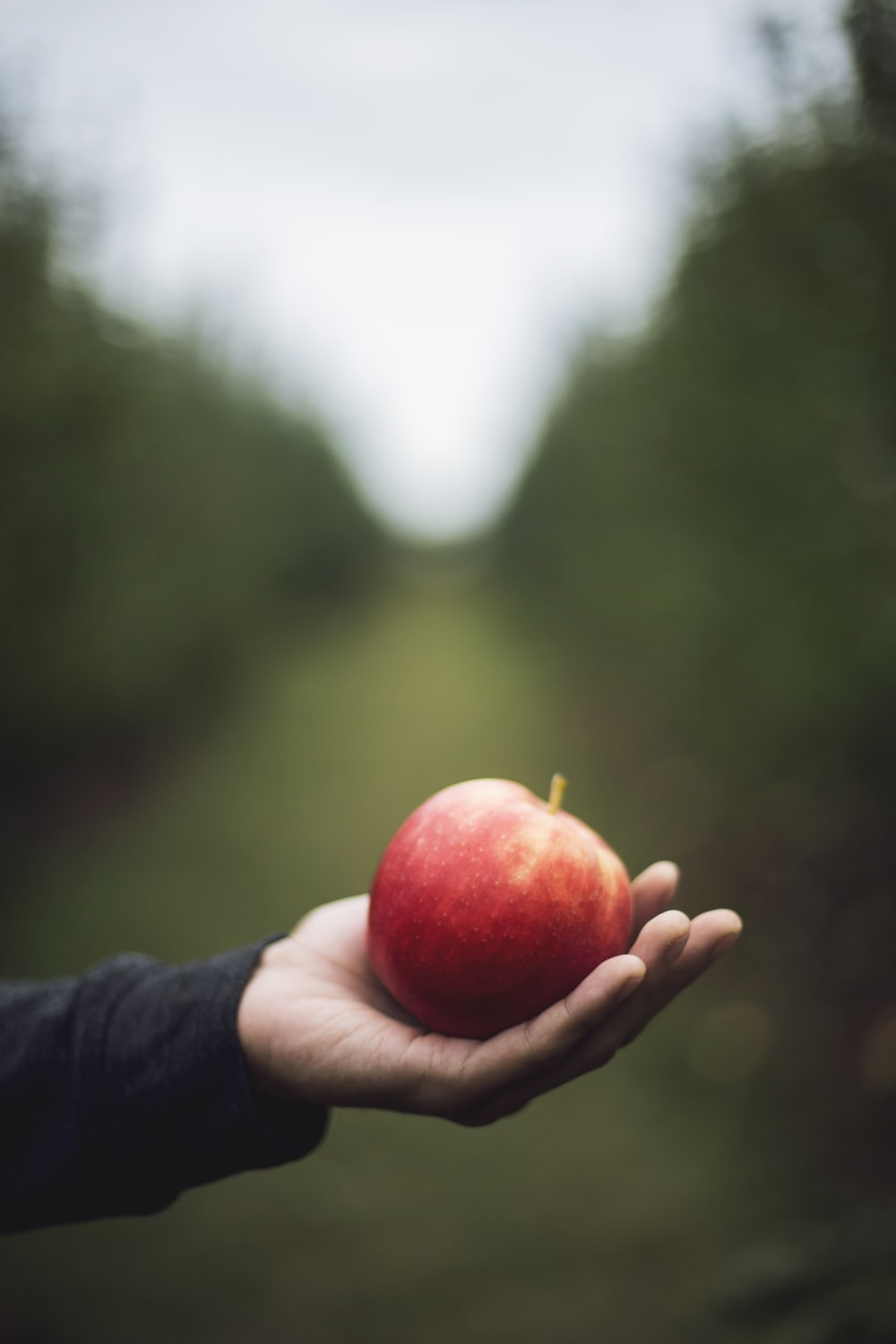 apple on person's hand