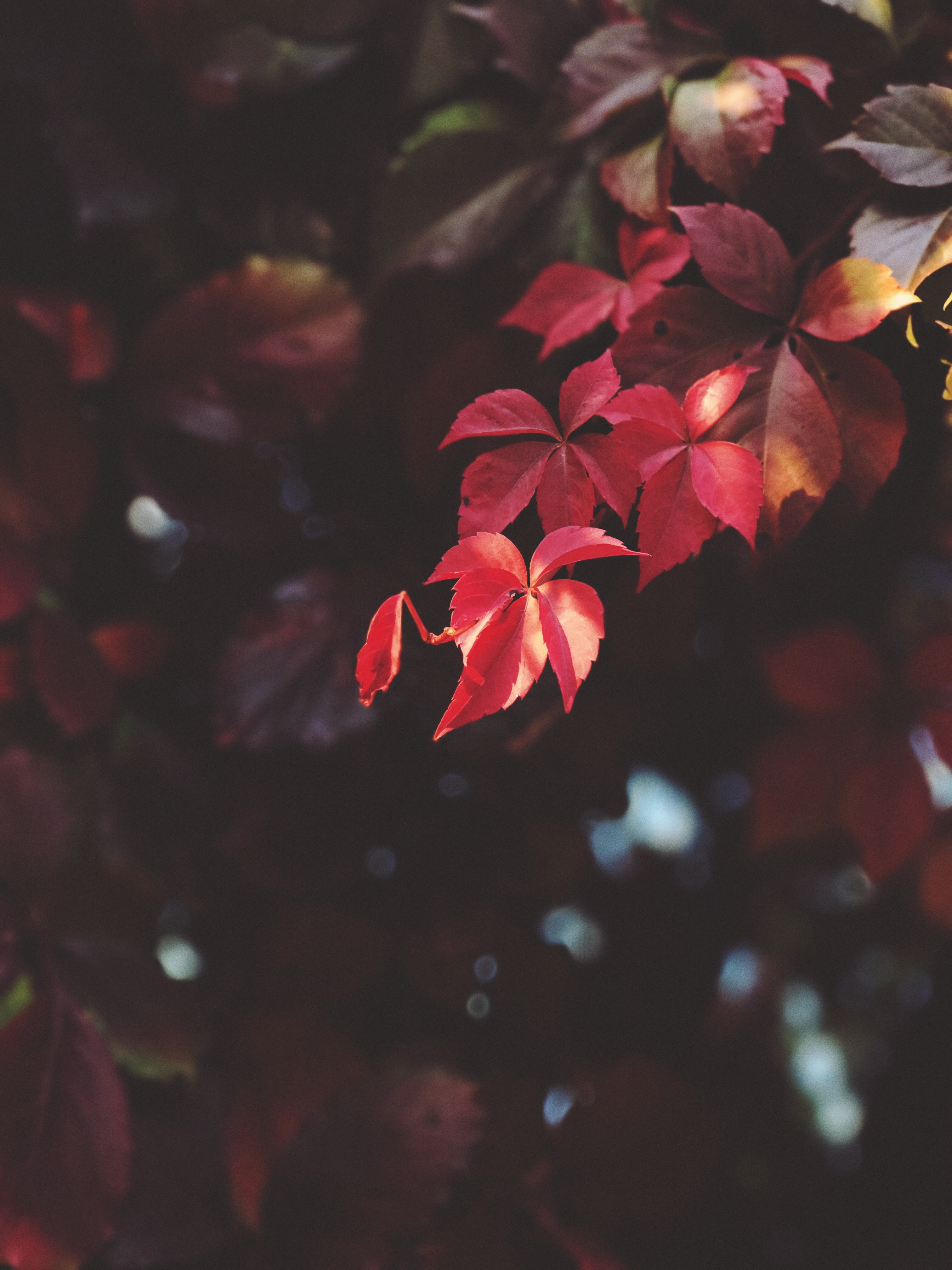 red leaves in shallow focus shot