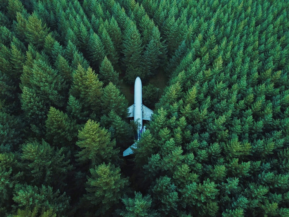 airplane on ground surrounded with trees