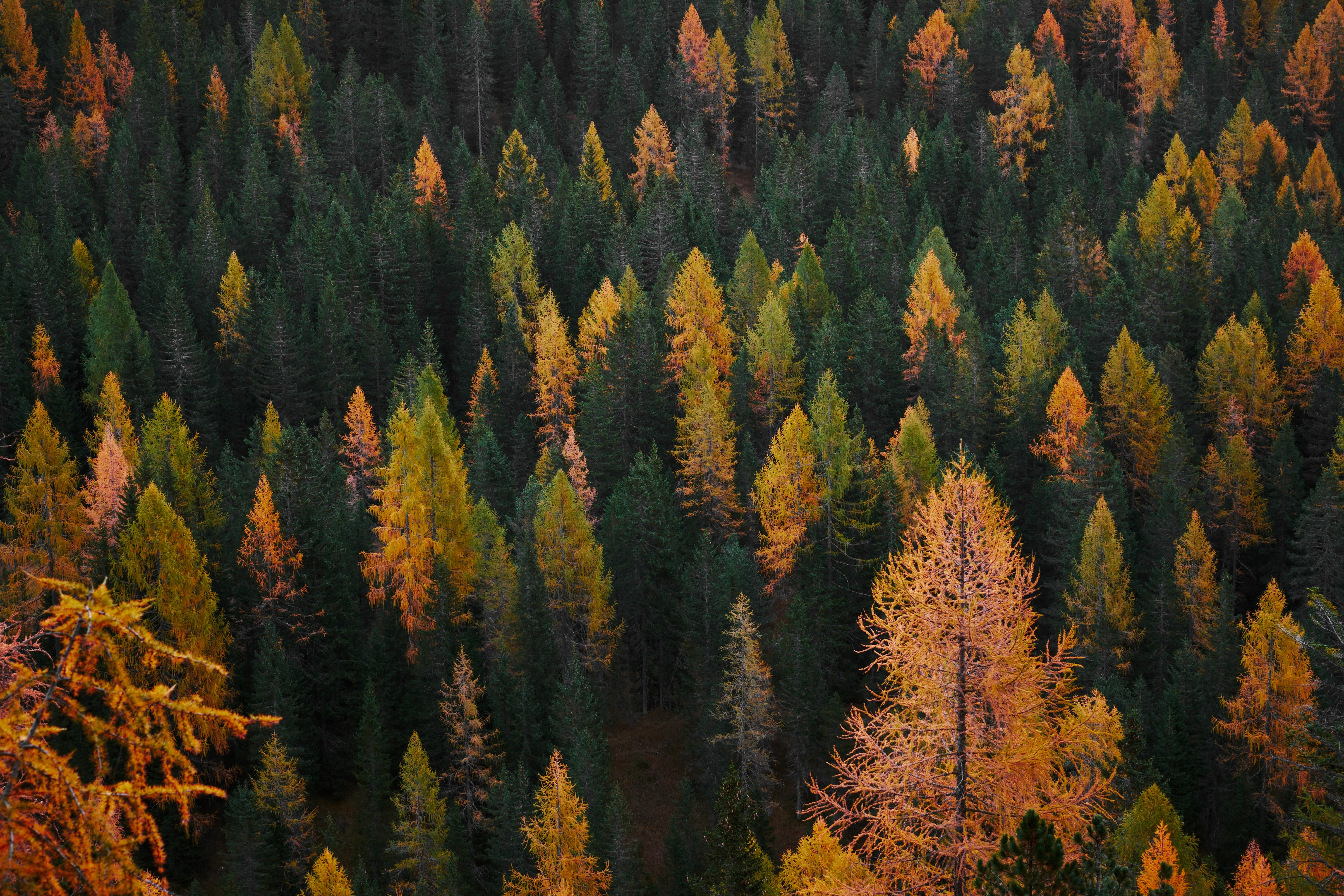 aerial view photography of forest