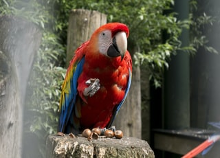 red and blue parrot on brown tree