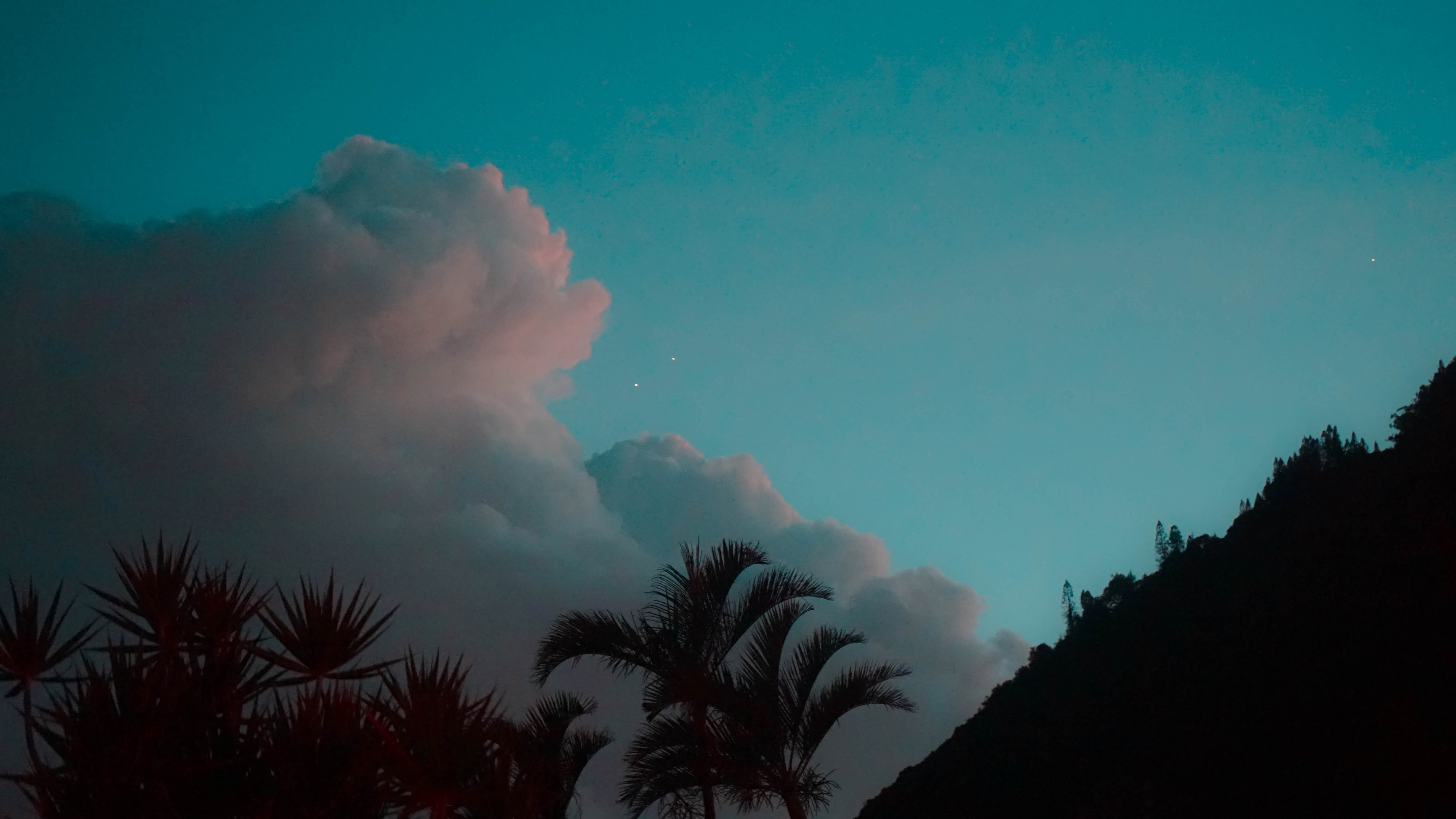 coconut trees under white clouds