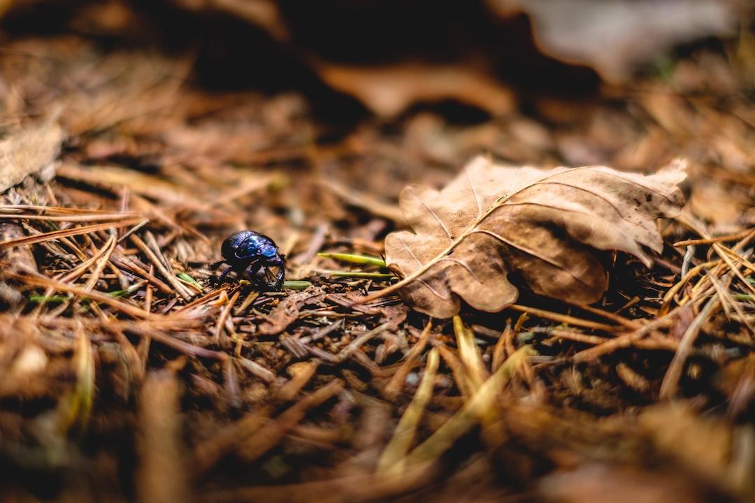 Autumn Beetle