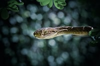 gray snake on tree