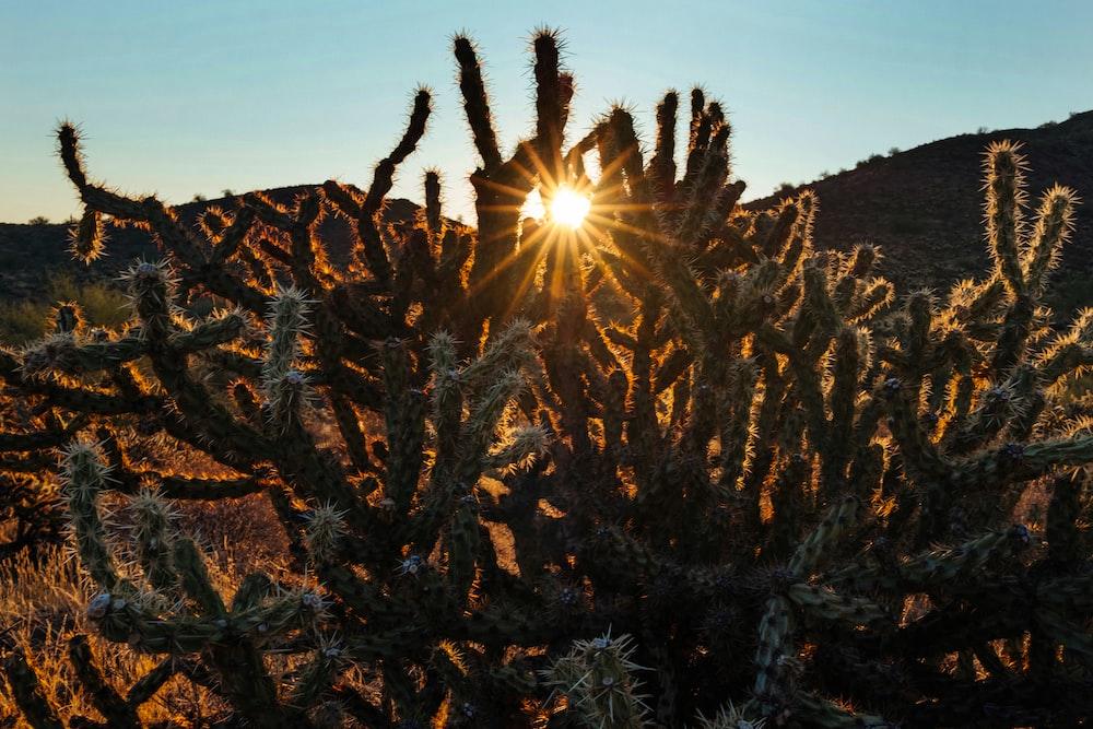 photo of a cactus and sunrise