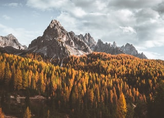 mountain ranges surrounded with trees
