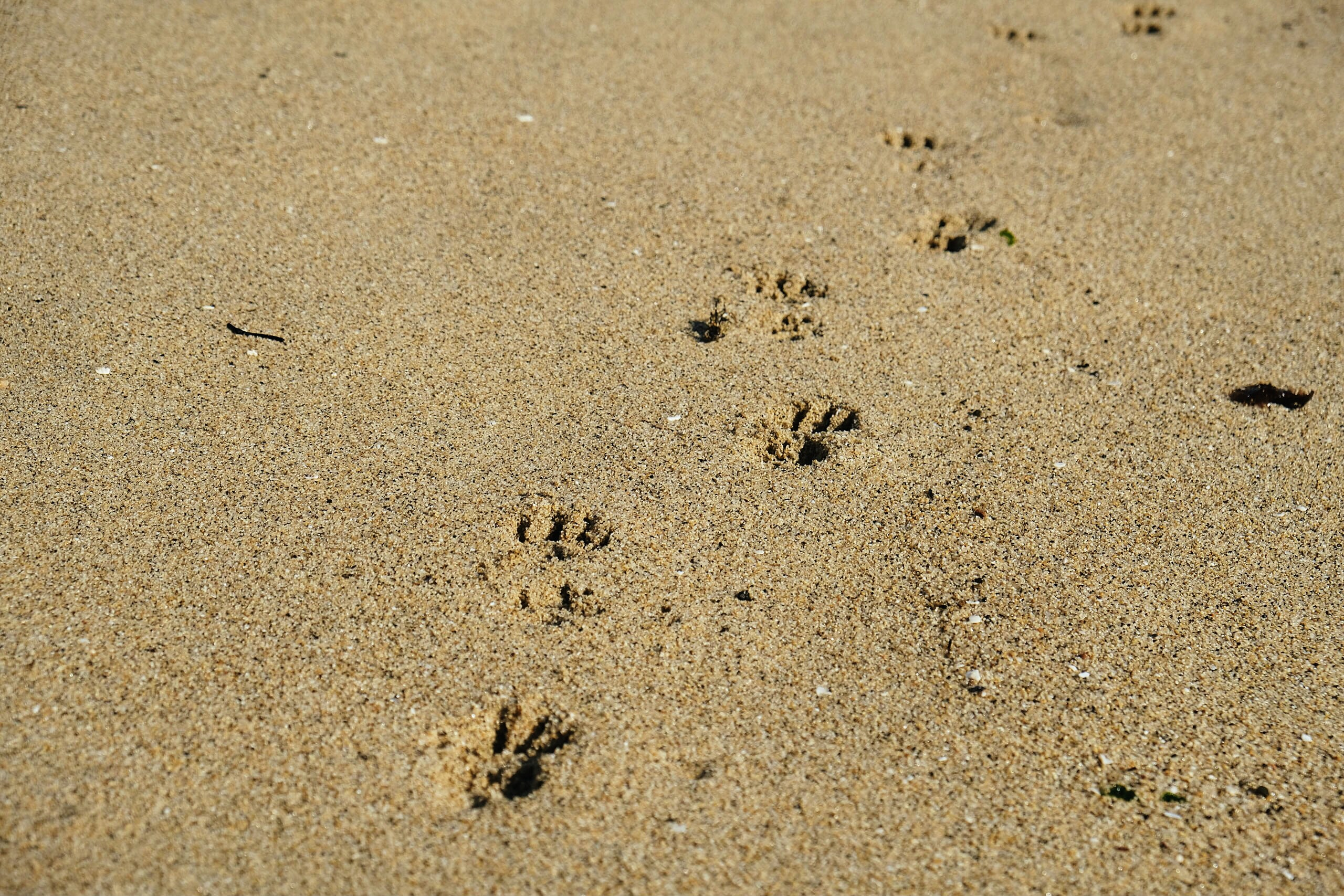 animal footprints on brown sand