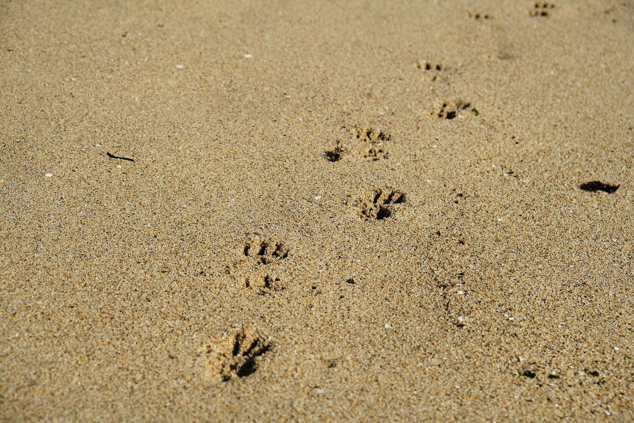 animal footprints on brown sand