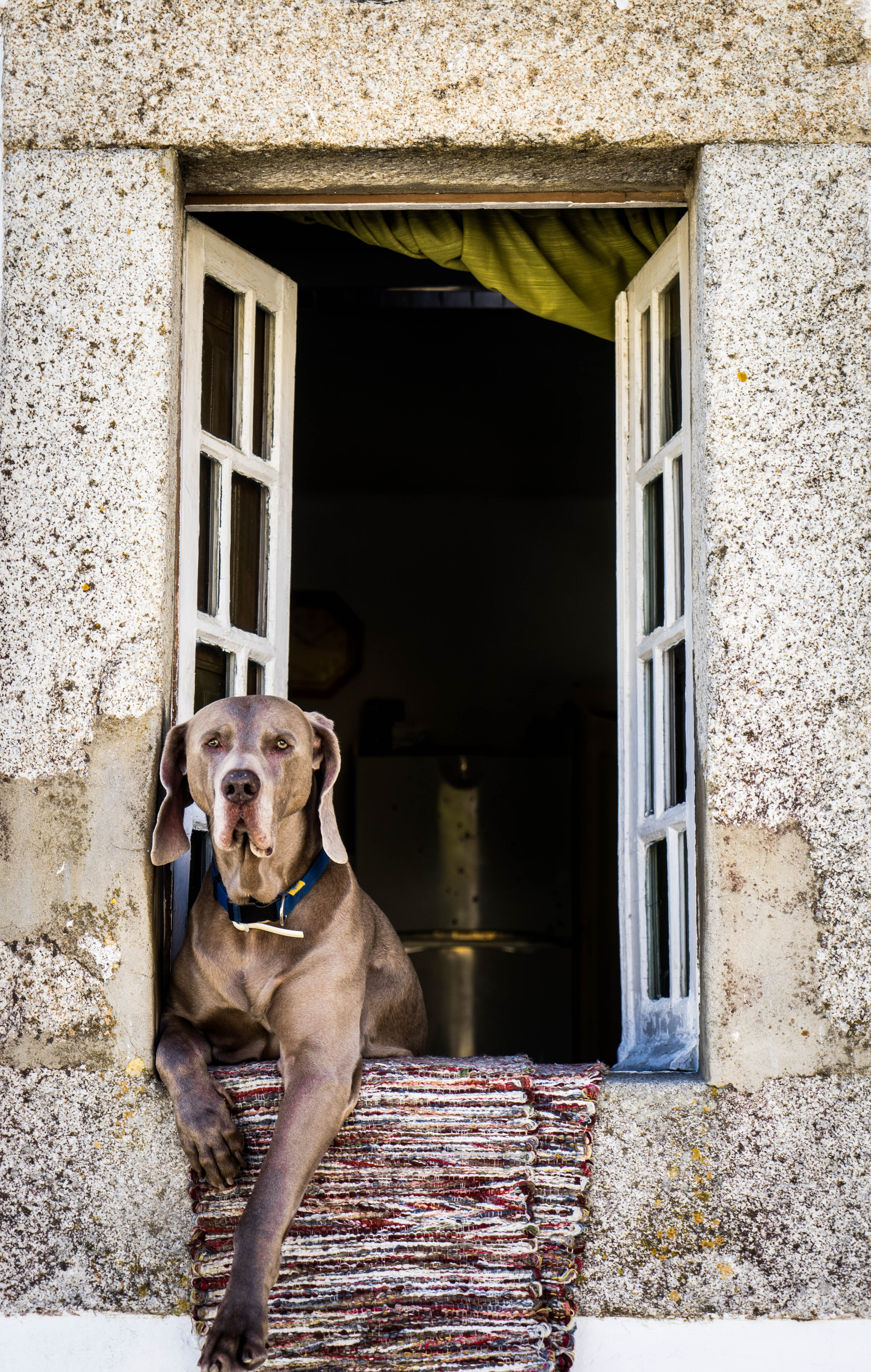 short-coated brown dog leaning on window during daytime