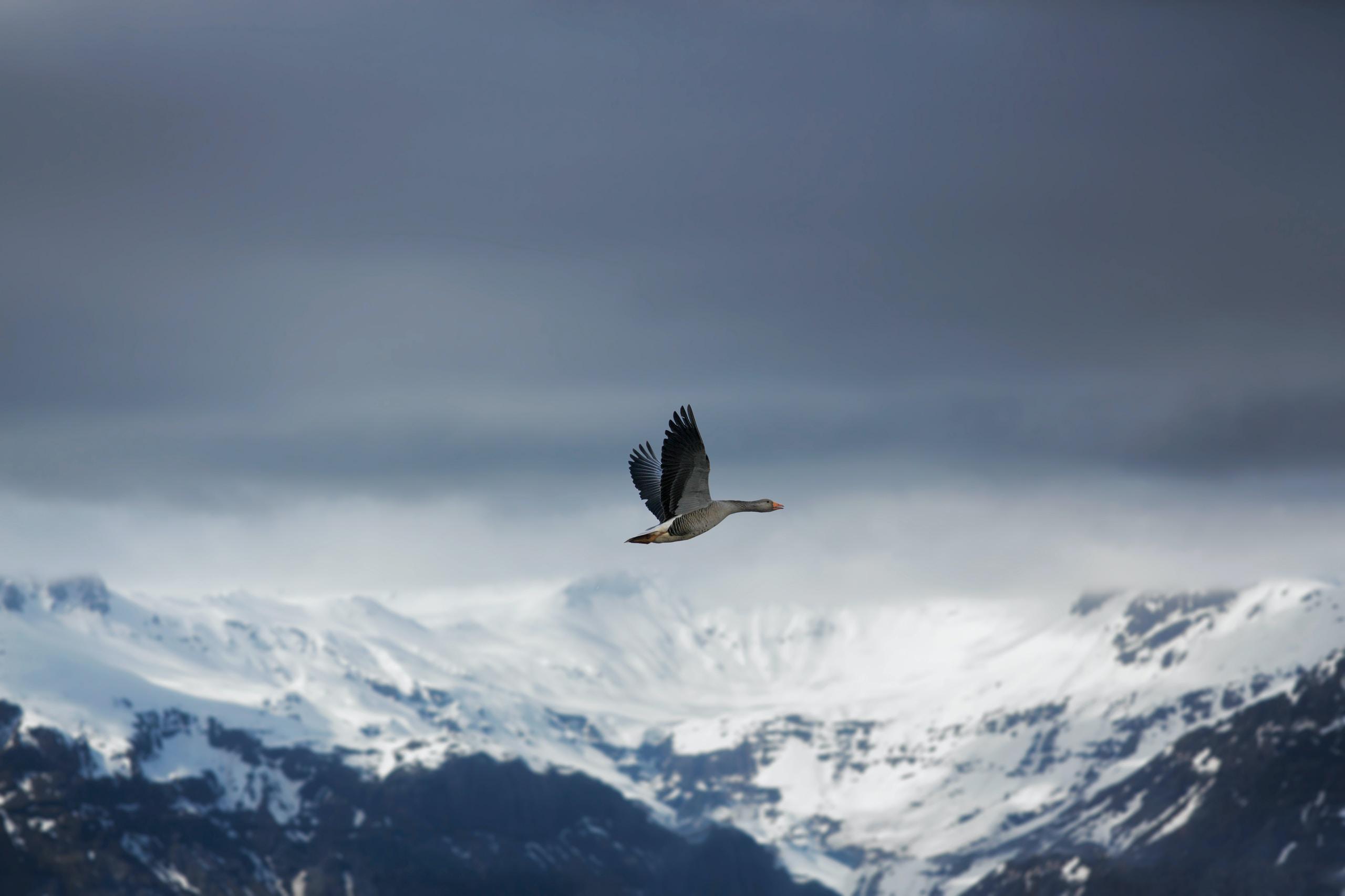 bird flying on the sky