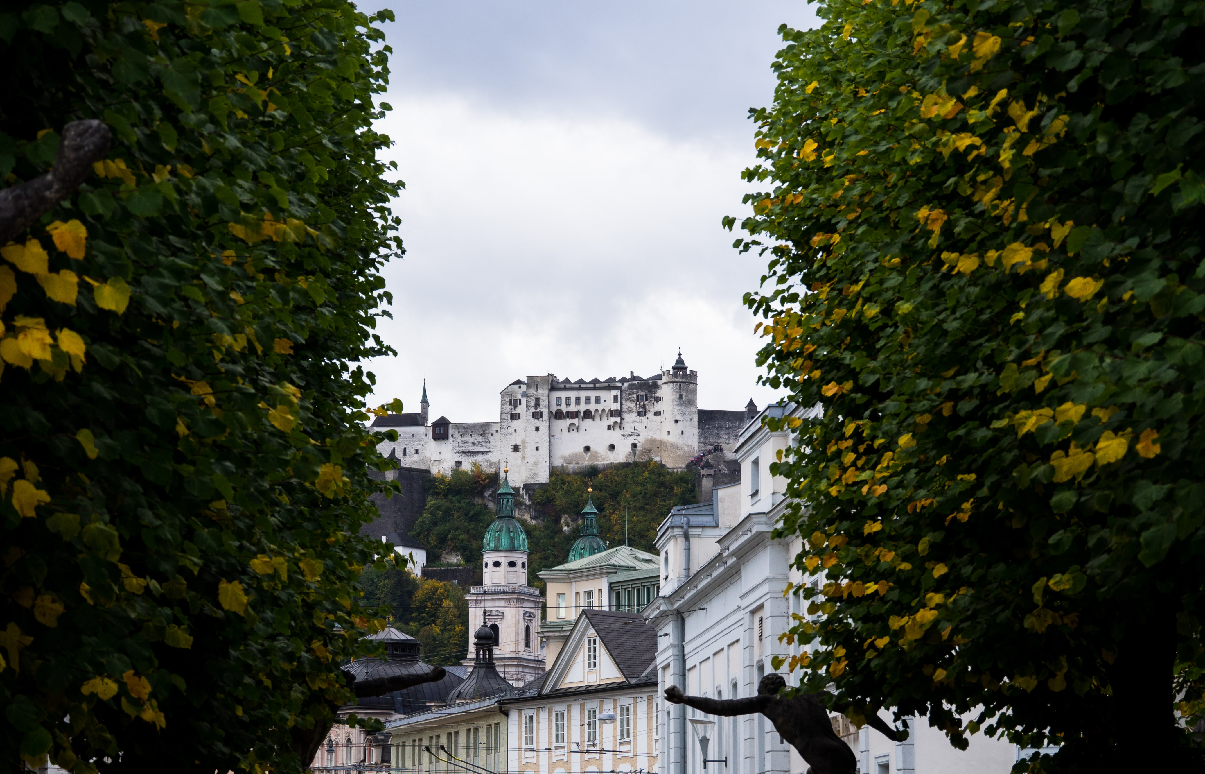yellow flowering trees with castle in distance