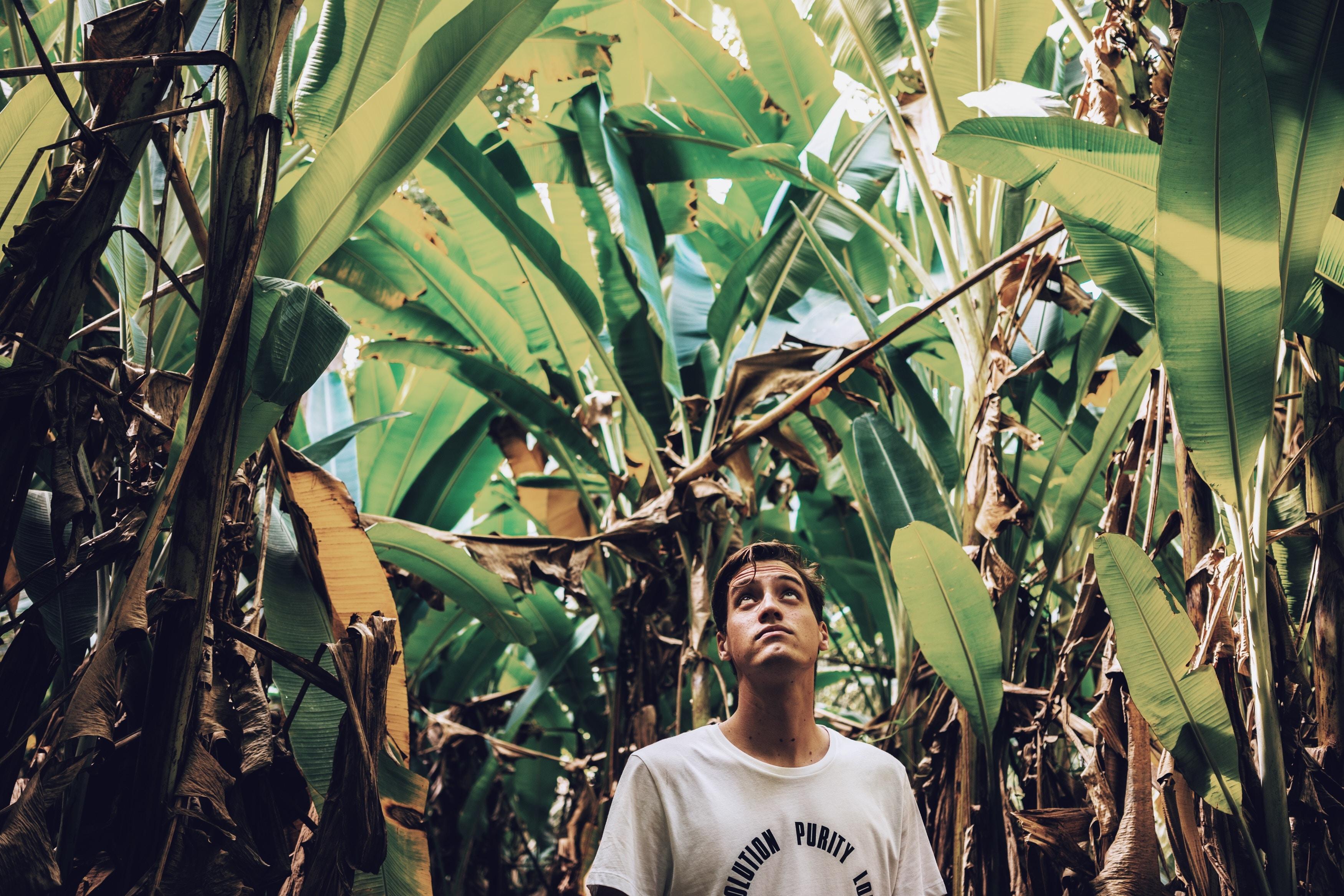 man standing between banana plant\