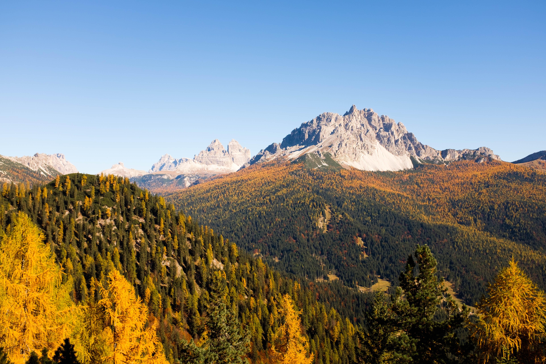 alp mountain near forest
