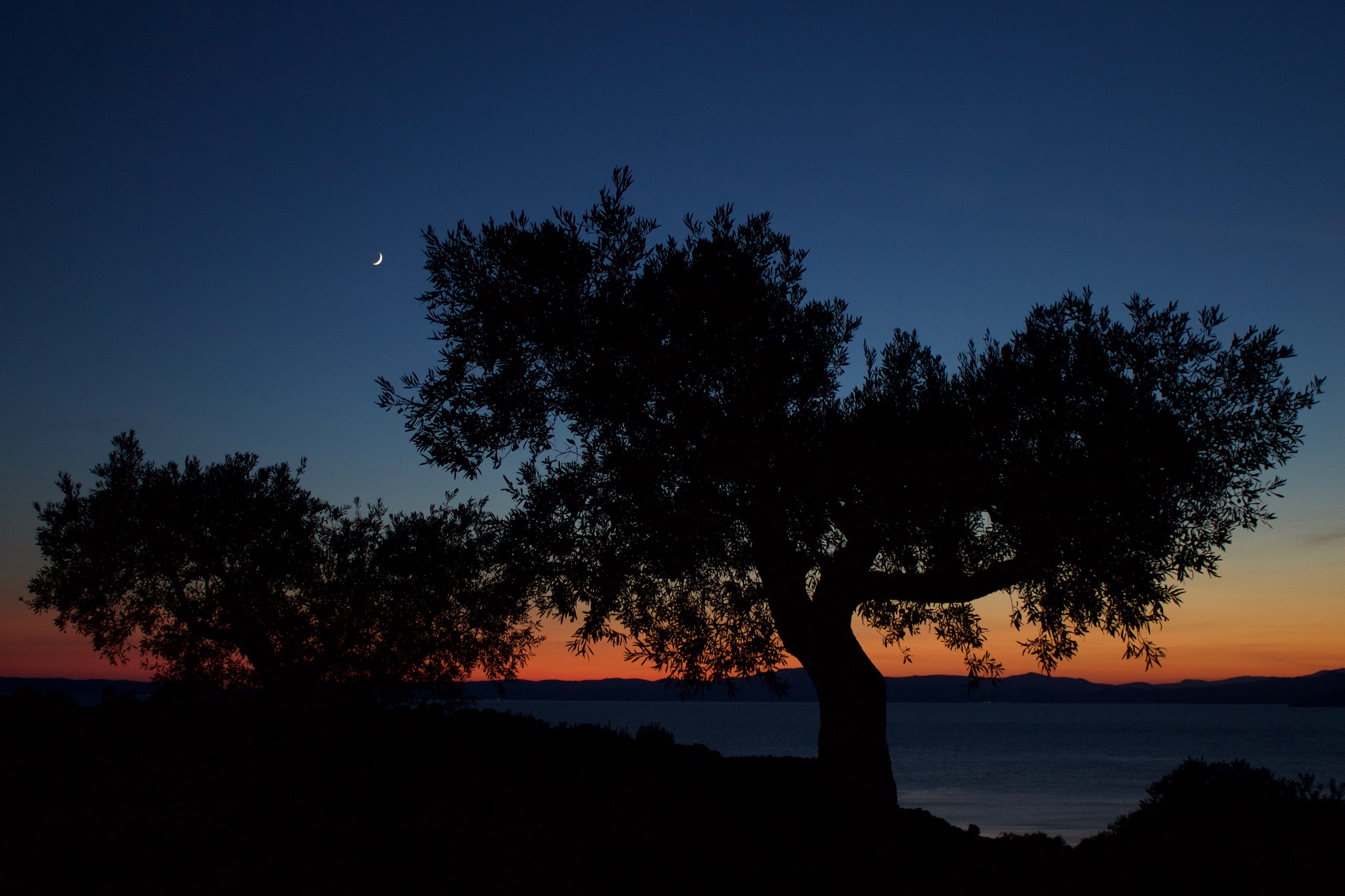 silhouette of tree beside ocean