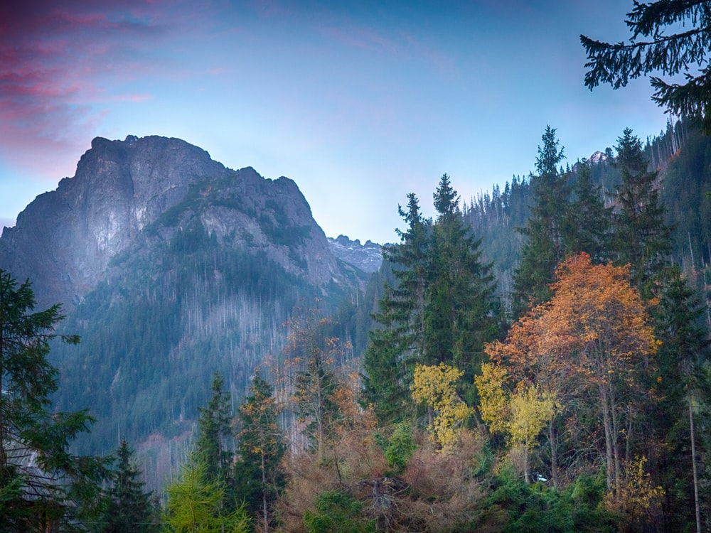 low angle photography of trees and mountains