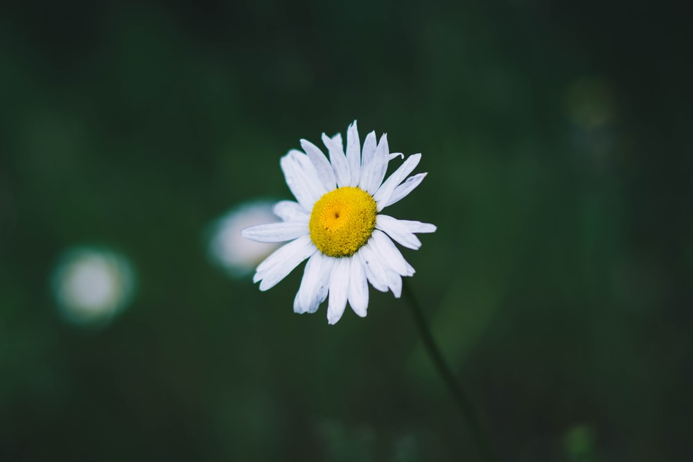 100 white flower pictures download free images on unsplash 6 mightylinksfo Gallery