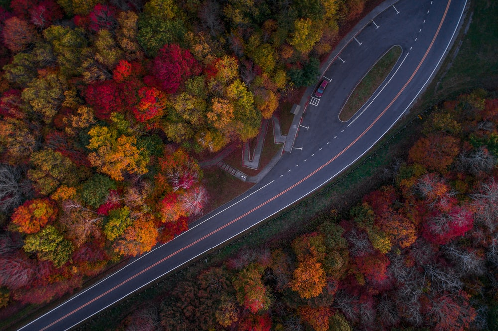 aerial photography of road and autumn trees during day