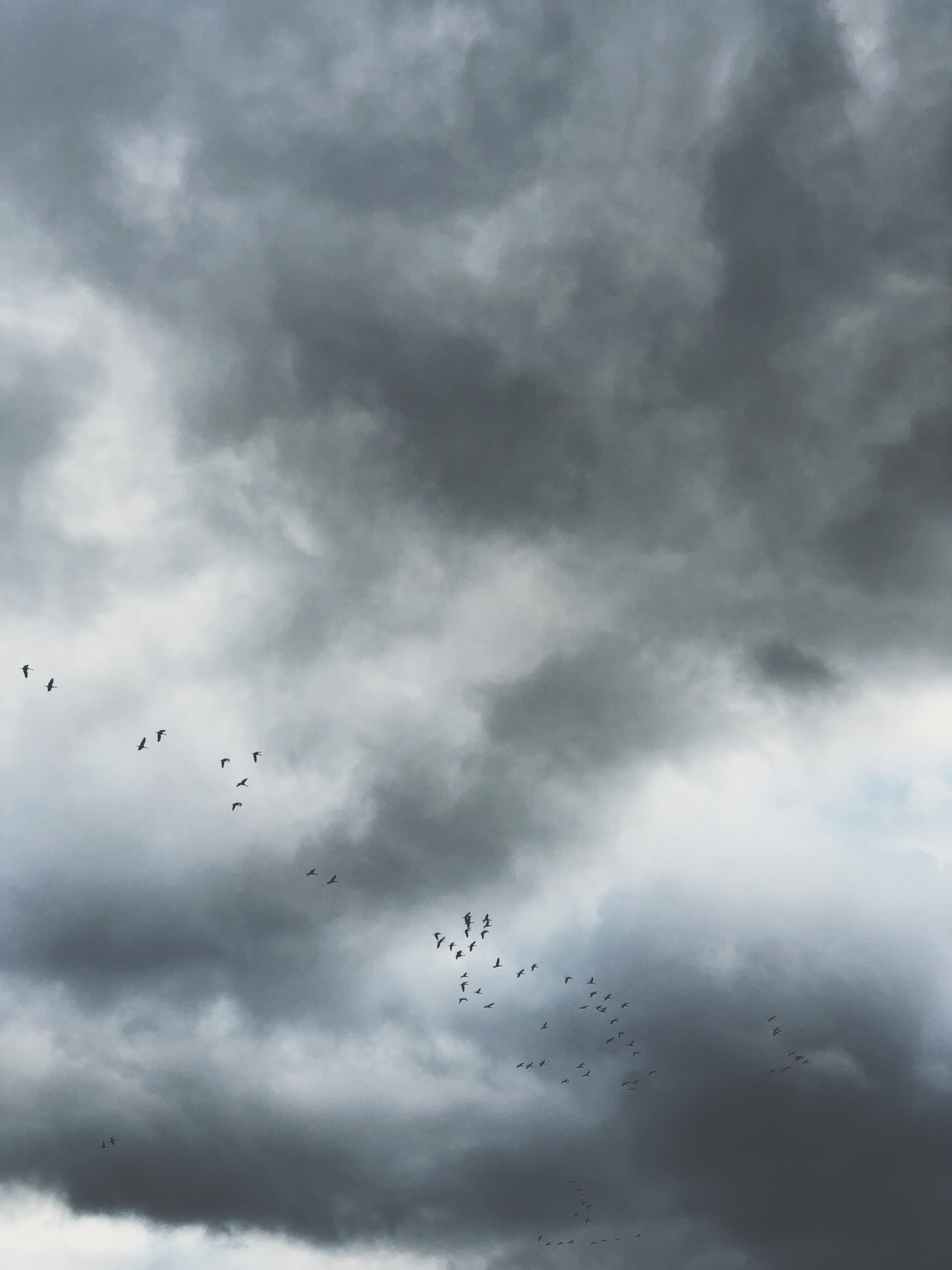 birds flying under gray clouds