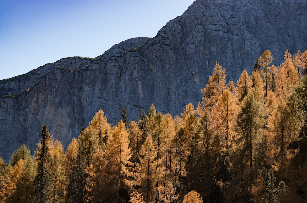 brown leafed trees beside mountain