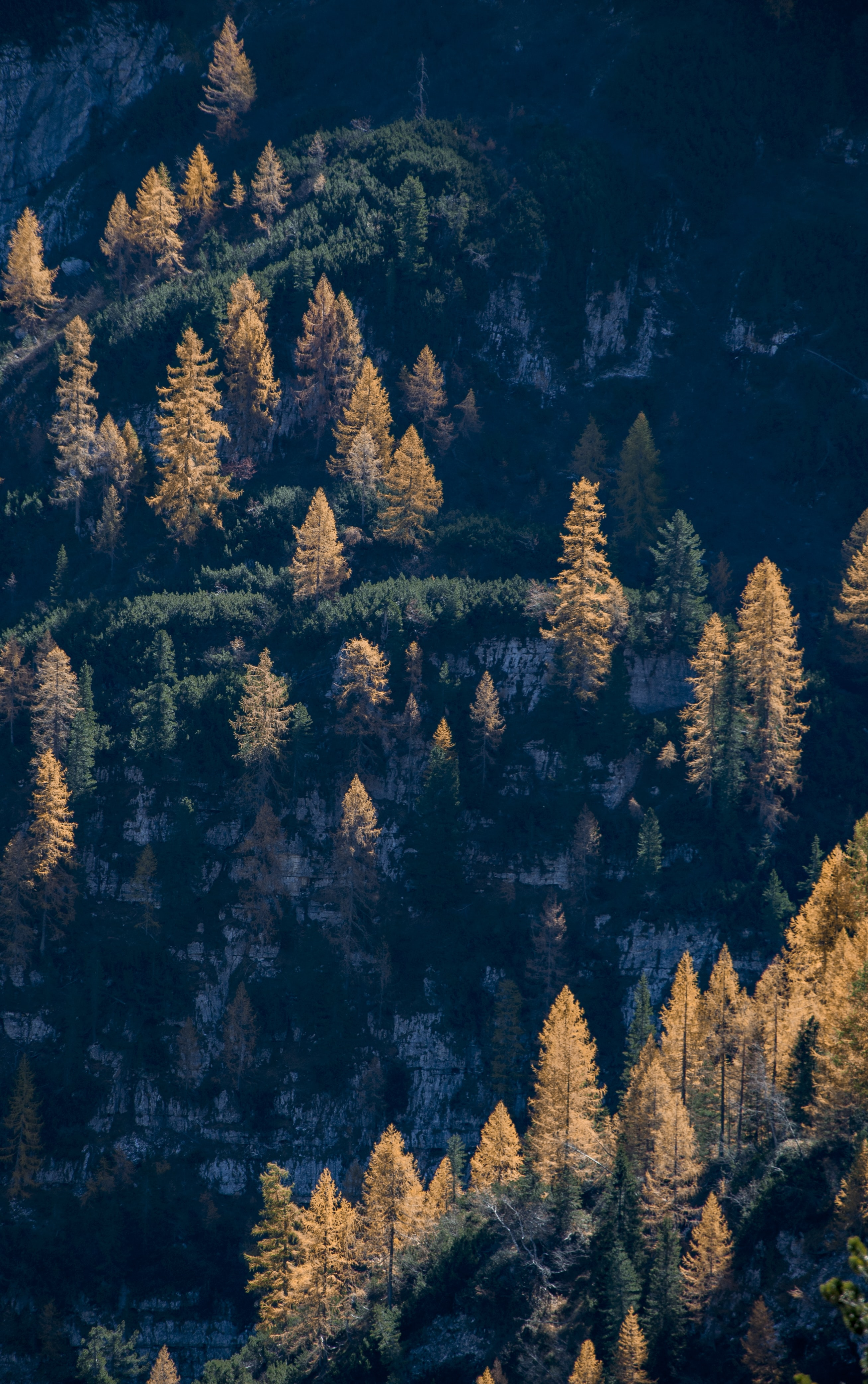 brown and green pine trees
