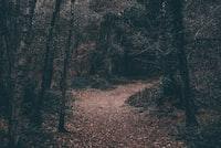 pathway between forest wallpaper